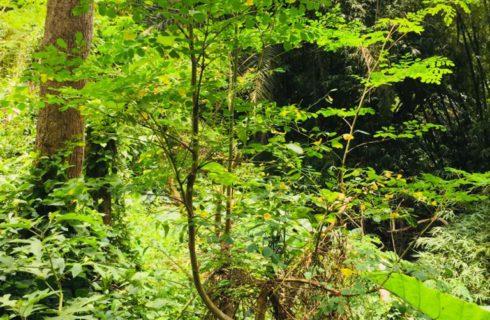 CDH with ECDH plants
